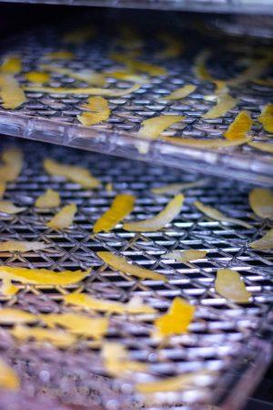 two trays of freshly sliced lemon peels on dehydrator trays