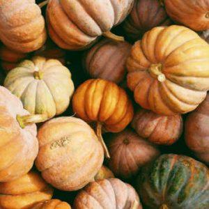 pumpkins representing fall.